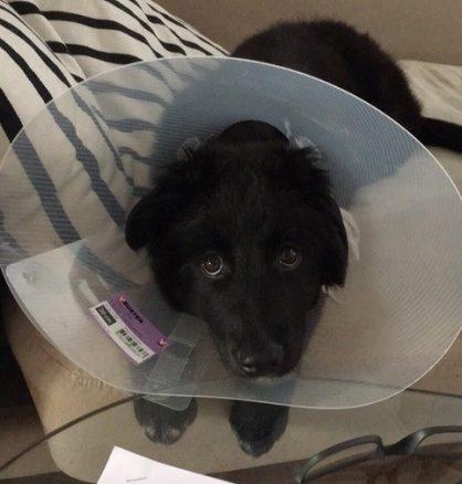Det första akuta veterinärbesöket kan komma fortare än man önskar