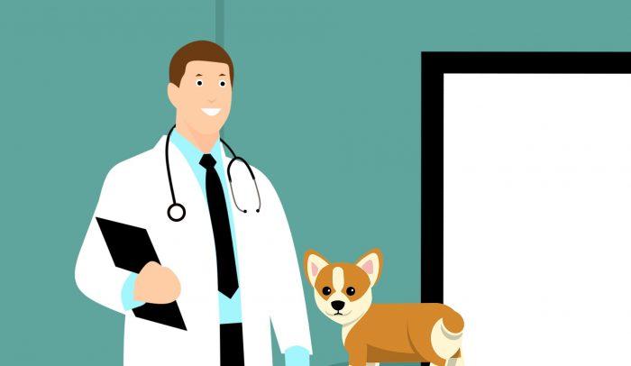Träna hunden inför kommande veterinärbesök
