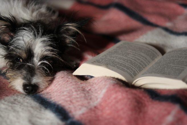 Värmande läsning om hundar
