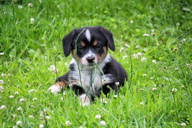 Gå en kurs och bli en klokare hundägare
