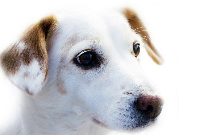 Ett förändrat klimat kan utsätta våra hundar för nya risker