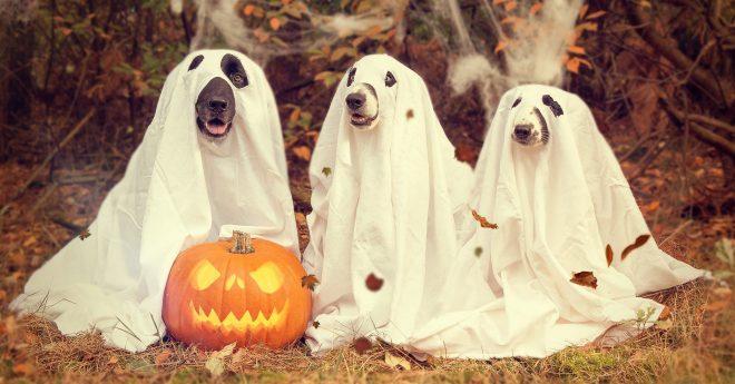 hund halloween