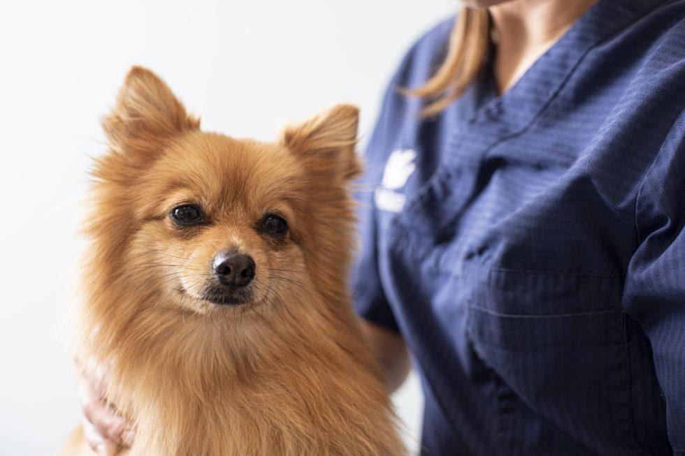 Djursjukvård – vad är rimligt?