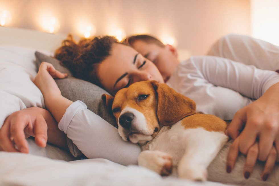 Sover hunden i sängen?