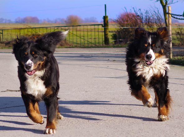 Luna och Teddy – överst på den engelska hundnamnslistan