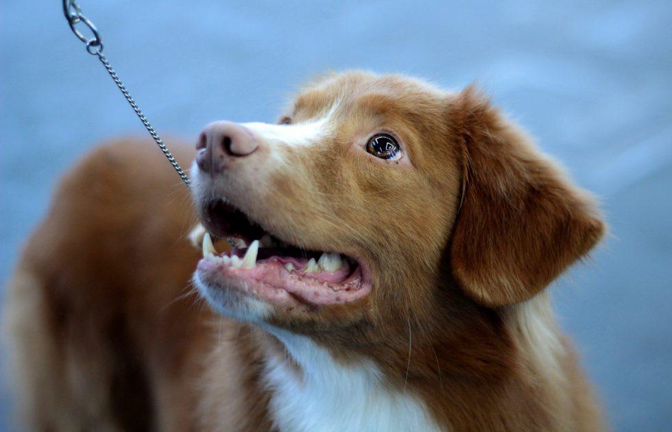 Hundstipendiet – nu är det dags igen!