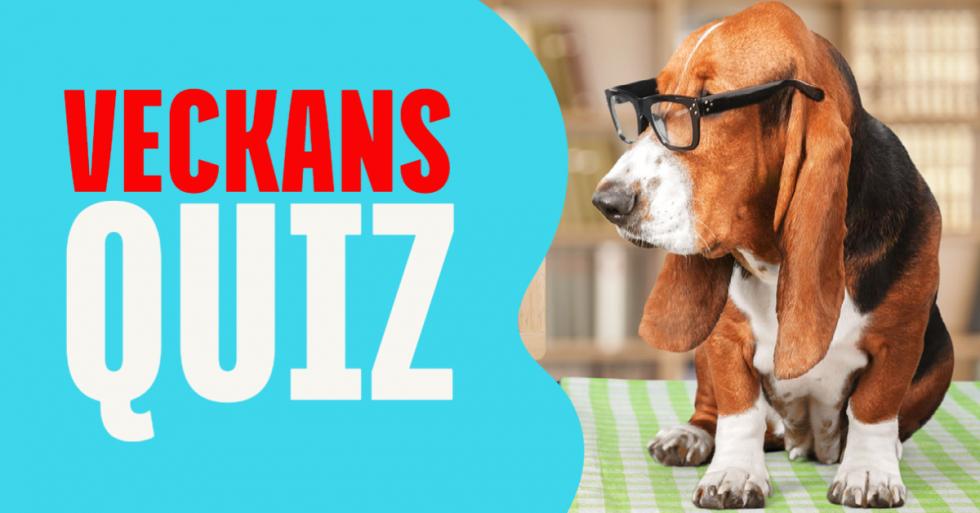 Quiz: Är du ett hundproffs?