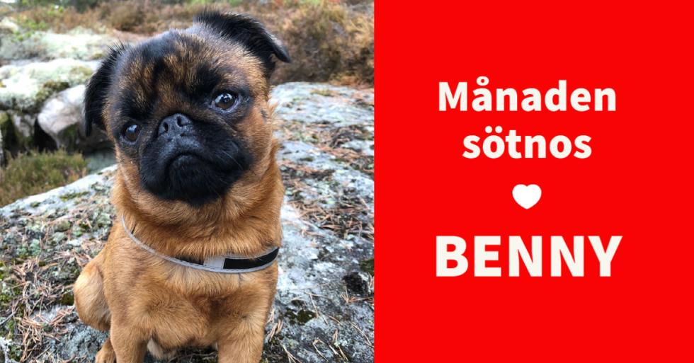 Månadens sötnos – Benny