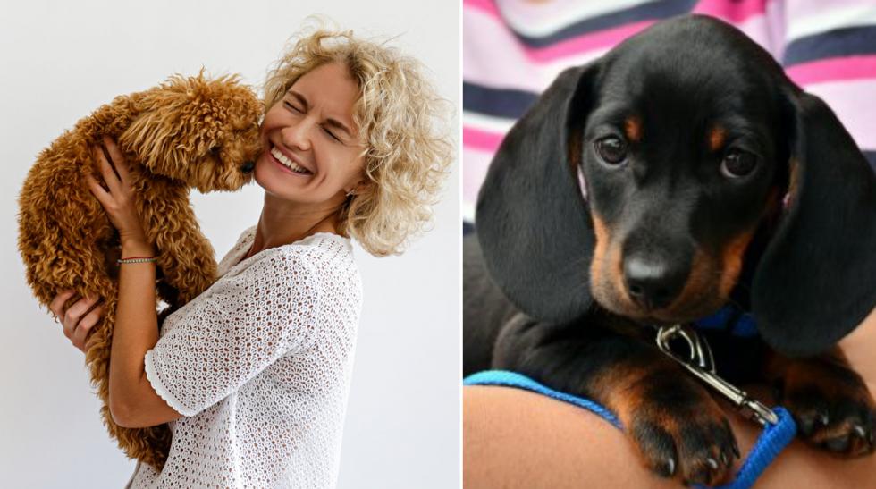10 saker du bör tänka på som nybliven hundägare