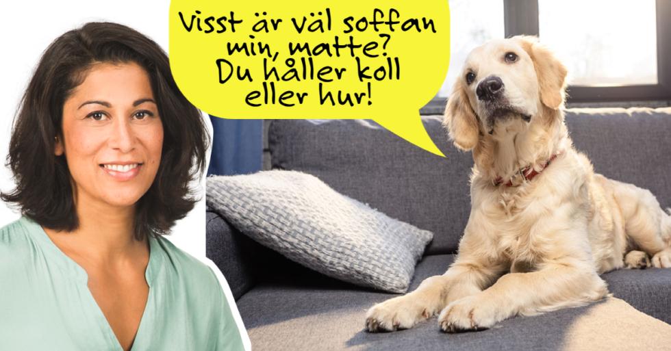 Experten: 9 tips för hunden som vaktar reviret