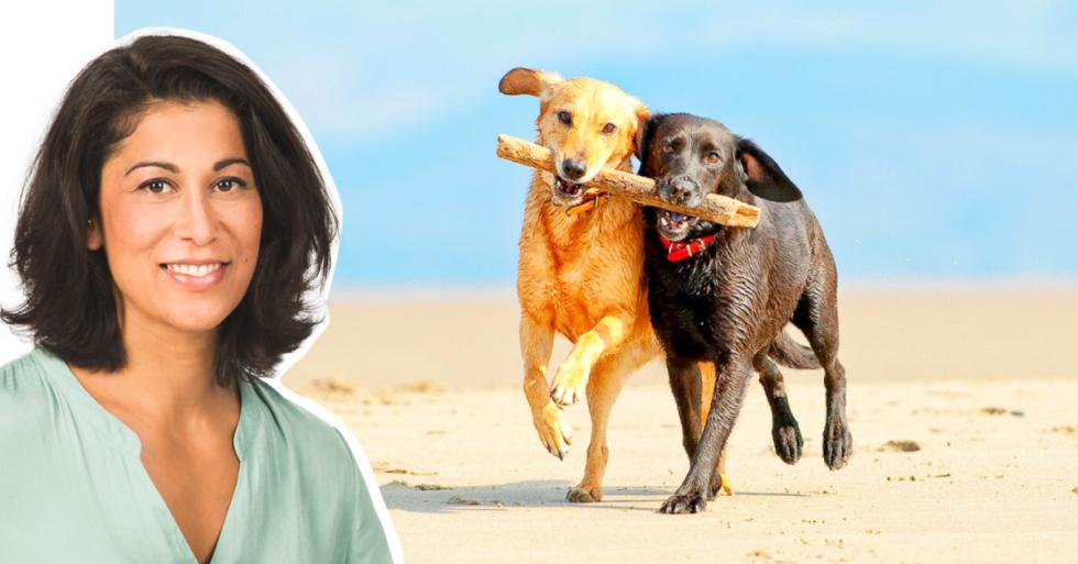Experten svarar: Är hundkompis ett måste?
