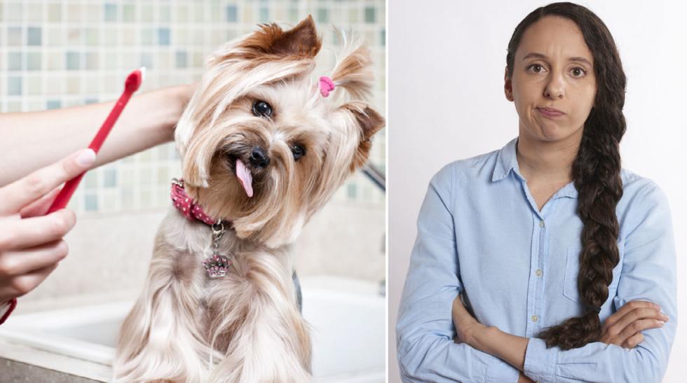 Tycker du att det är svårt att borsta tänderna på din hund?