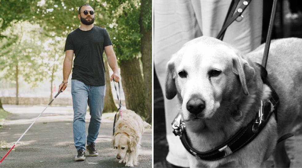 Svenska ledarhundsförare diskrimineras