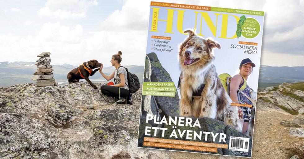Nu är Härliga Hund nr 6 här – stor guide för en hundvänlig semester!