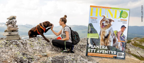 För ett aktivt, hälsosamt och inspirerande hundliv