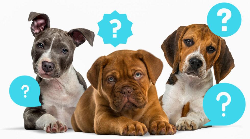 Quiz: Har du koll på hundar?
