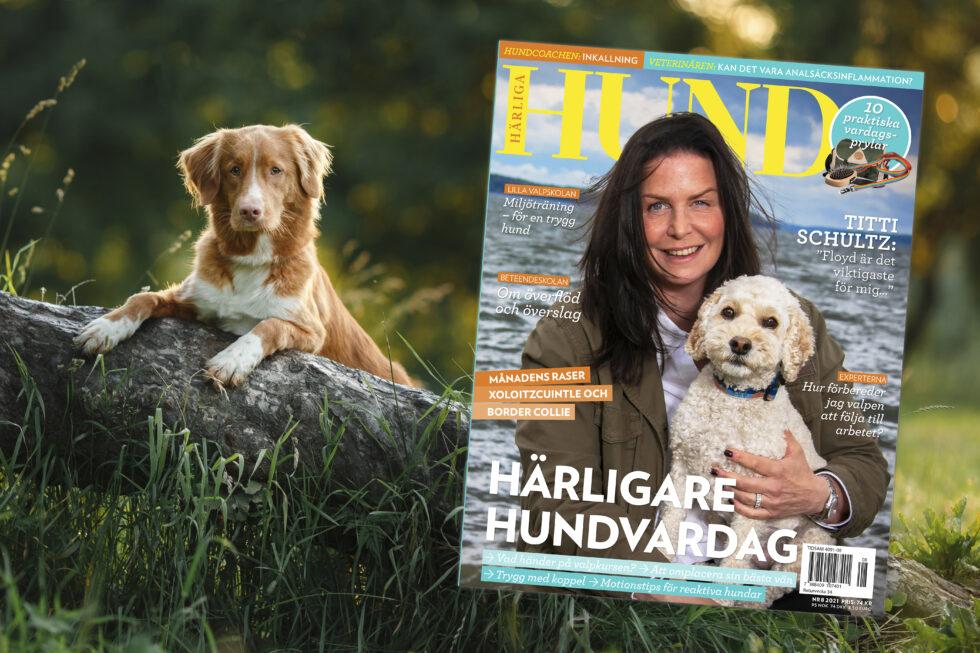Nu är nr 8 ute i butik! – Råd och tips för en härligare hundvardag