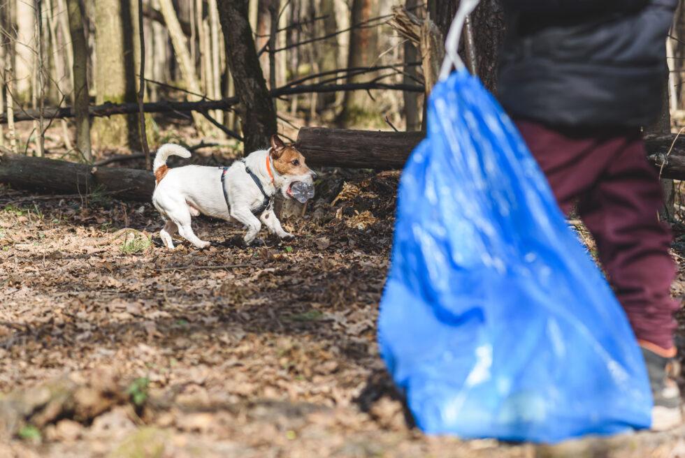 World Cleanup Day – Plocka skräp på hundpromenaden