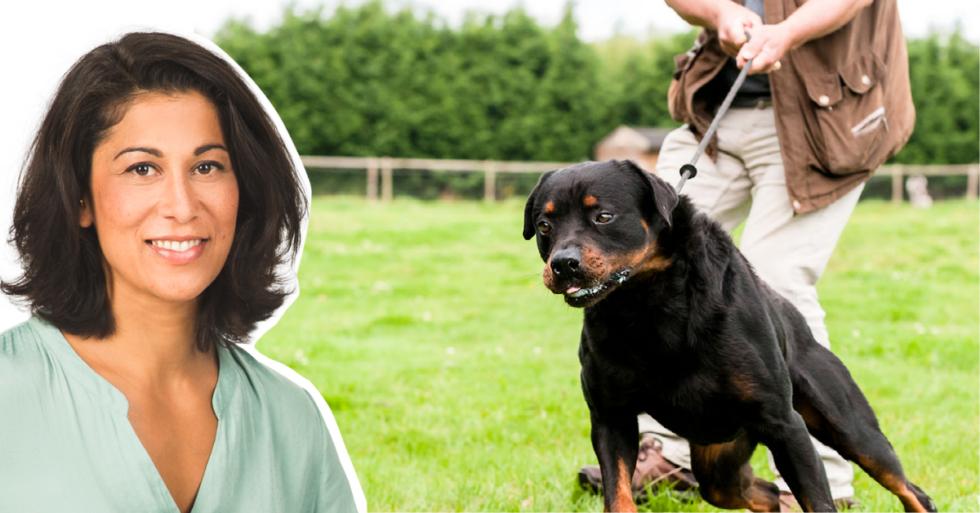 Experten svarar: Varför drar hunden i kopplet?